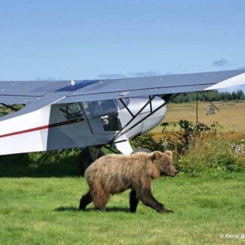 Alaska Adventures and Tours