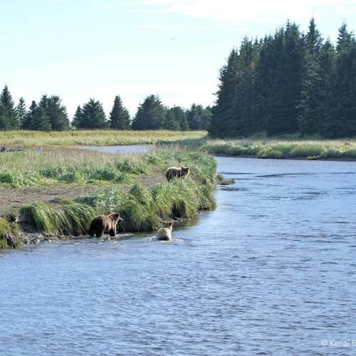 Alaska bear viewing best practices