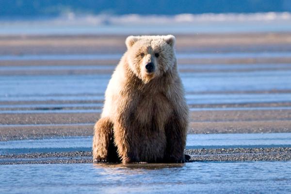 bears-beach