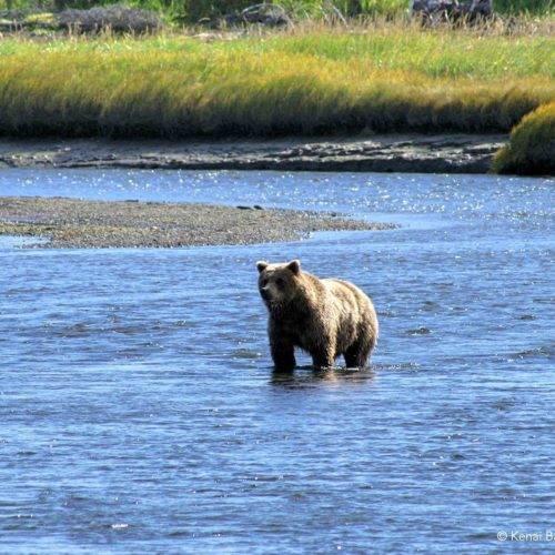 Bears and Beaches Backpacking Alaska
