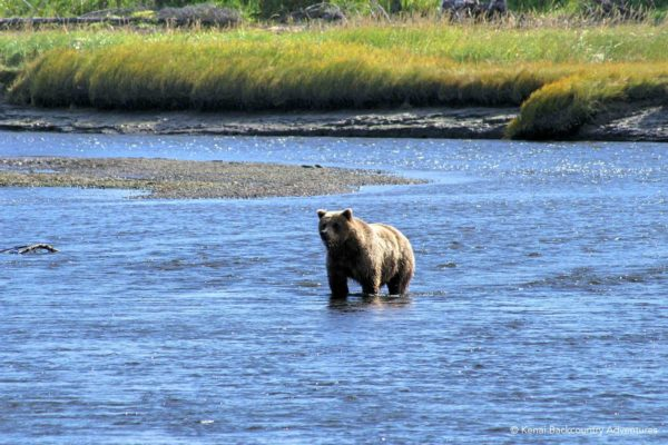 Bears and Beaches Backpacking Alaska