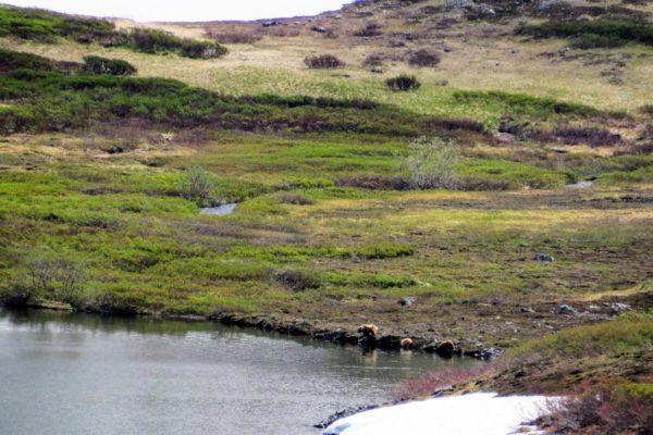 Kenai Mountains and Glaciers Alaska Backpacking-101