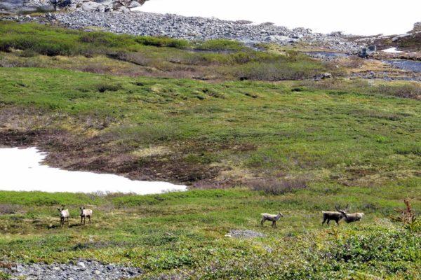 Kenai Mountains and Glaciers Alaska Backpacking-106