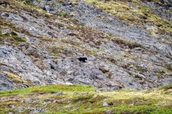 Kenai Mountains and Glaciers Alaska Backpacking-113