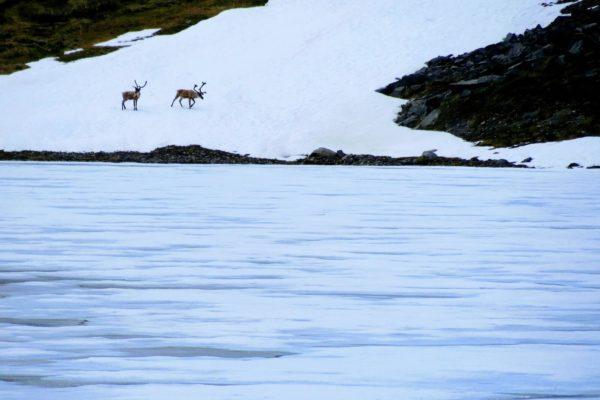Kenai Mountains and Glaciers Alaska Backpacking-114