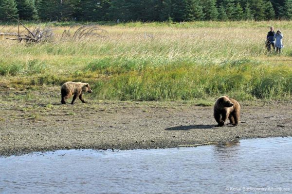 bear-viewing-kenai-backcountry-adventures