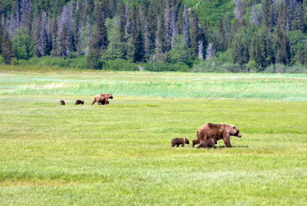 Bear Viewing Adventure in Lake Clark National Park