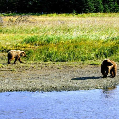 Private Custom Bear Viewing Adventure Lake Clark National Park