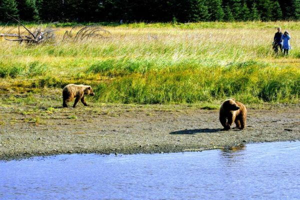 Private Custom Bear Viewing Adventure Lake Clark National Park