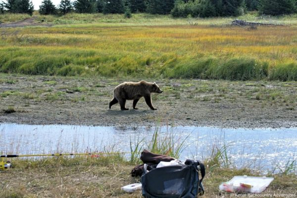 Silver-salmon-creek-fishing-kenai-backcountry-adventures-alaska