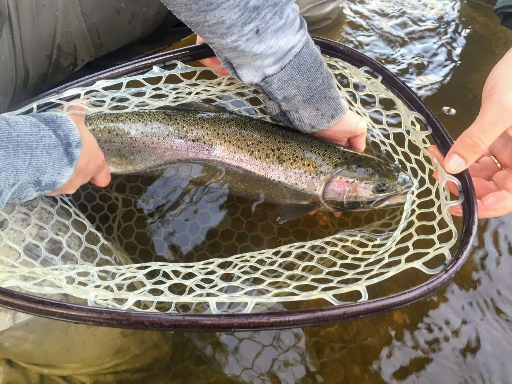 Twin rivers fly fishing kenai backcountry adventures for Backcountry fly fishing