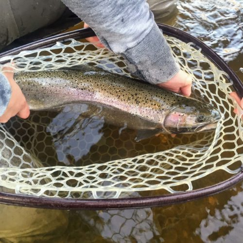 Steelhead-Alaska-Fly-Fishing