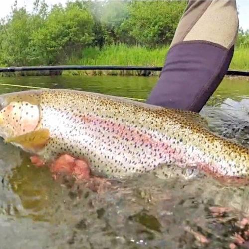 Alaska fishing licenses and limits 2017 kenai for Alaska fishing license