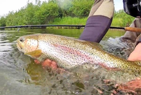 Alagnak River Fishing