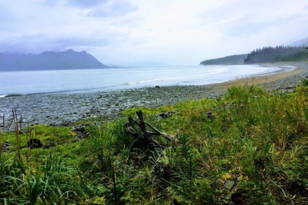 ALASKA BEARS TRIP-14