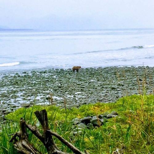 Alaska Bears Base Camp