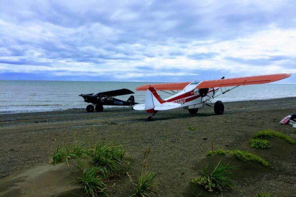ALASKA BEARS TRIP-5