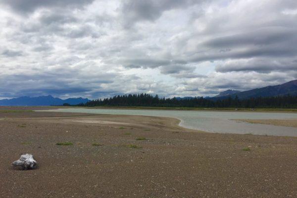 ALASKA BEARS TRIP-7