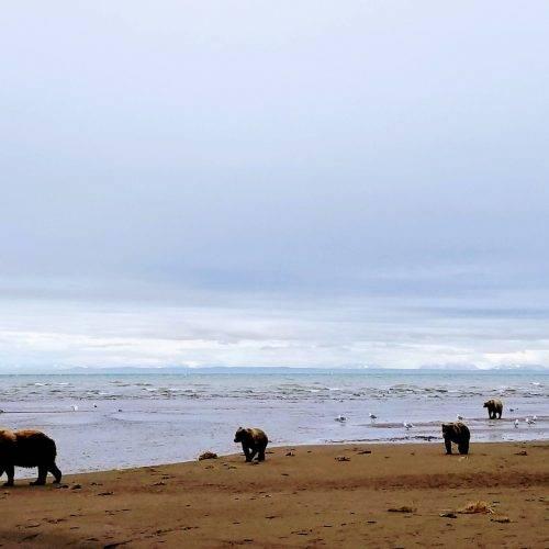 Alaska Bears Base Camp Kenai Backcountry Adventures_170751
