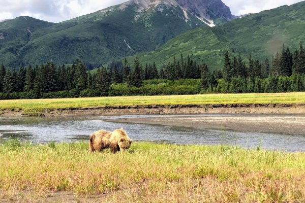 Alaska Bears Base Camp Kenai Backcountry Adventures_2092