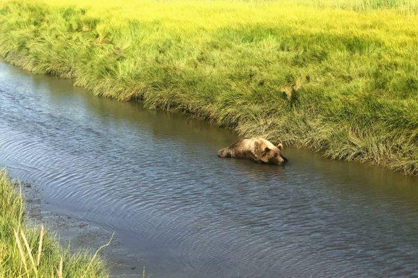 Alaska Bears Base Camp Kenai Backcountry Adventures_2116