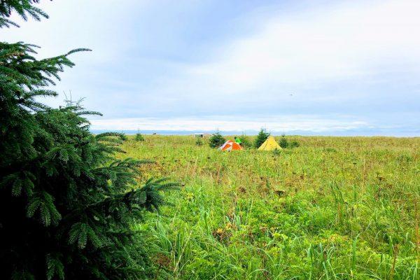 Alaska Bears Base Camp Kenai Backcountry Adventures_2898