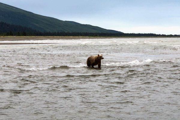 Alaska Bears Base Camp Kenai Backcountry Adventures_2953
