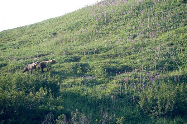 Mountains-Glaciers-Base-Camp-Lake-Clark-National-Park-Alaska92