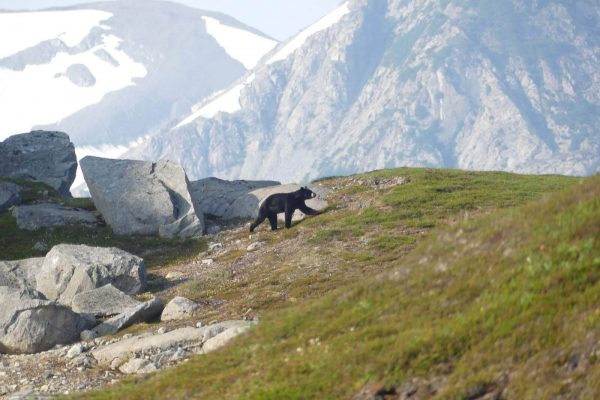 Mountains-Glaciers-Base-Camp-Lake-Clark-National-Park-Alaska95