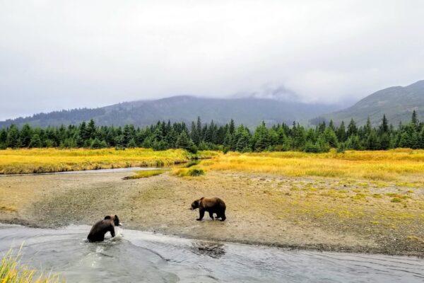 Alaska-Bear-Adventures-1