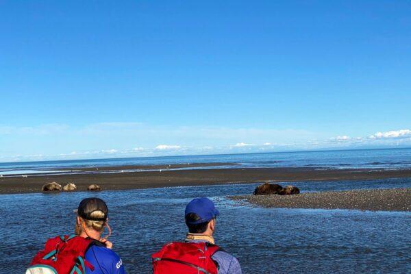 Alaska-Bear-Viewing-Experience-13