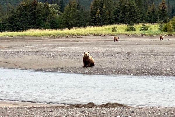 Alaska-Bear-Viewing-Experience-14