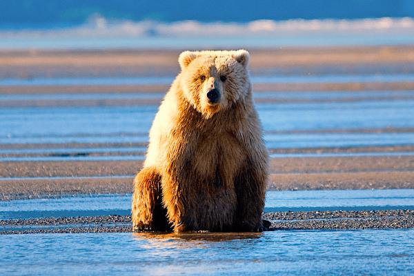 Alaska-Bear-Viewing-Experience-17