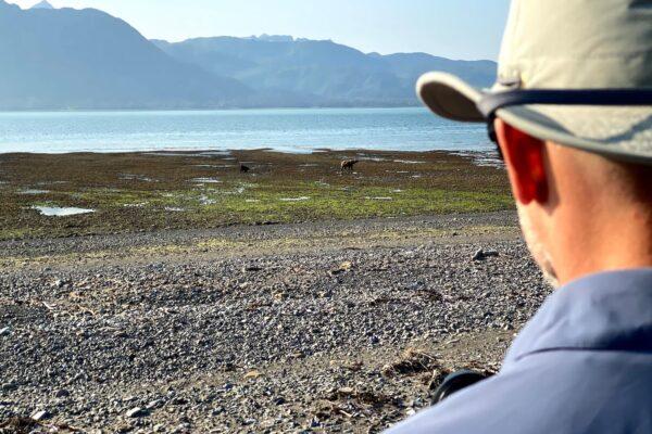 Alaska-Bear-Viewing-Experience-2